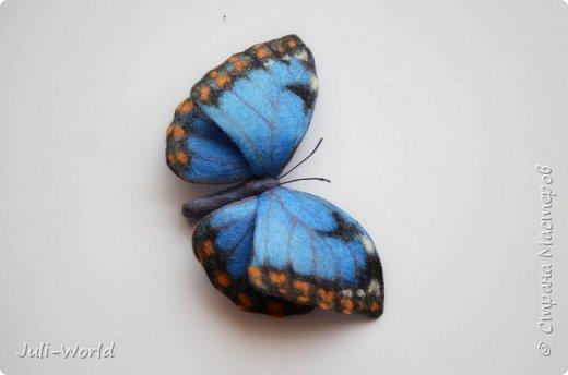 Стрелиция, бабочка, тигровая лилия, такка. фото 7