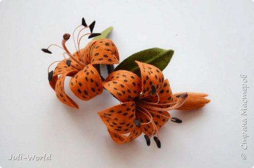 Стрелиция, бабочка, тигровая лилия, такка. фото 11