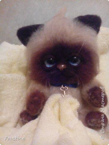 Здравствуйте,дорогие мастера! Продолжаем создавать замечательного котеночка Чарлика! Начало в записи рэгдолл Чарли. фото 1