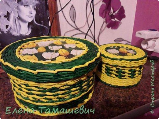 Желтые тюльпаны.  фото 1