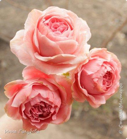 Привет всем жителям! Сегодня пионовидные розы и небольшой МК по ним) фото 3