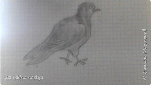 """Сегодня вам покажу, как с помощью карандаша рисовать голубей – самых мирных существ в мире. Ведь даже если они вам нагадят на голову, они сделают это мирно! Для начала нарисуем вот такую """"заготовку"""". фото 4"""