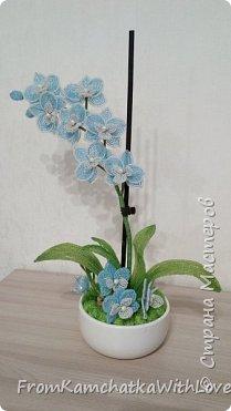 """Орхидея """"Нежность"""""""