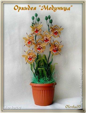 """Орхидея """"Медуница"""" фото 1"""