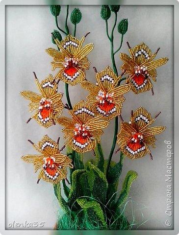 """Орхидея """"Медуница"""" фото 2"""
