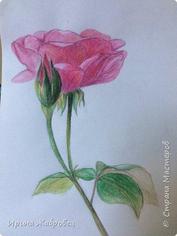 Рисунок акварельными карандашами по фотографии. фото 9