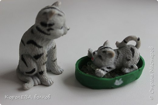 """""""Всем привет! Меня зовут Диана и я-заводчица кошек породы """"британская короткошёрстная"""". Котёнок этой породы снялся в рекламе  кошачьего корма """"Вискас"""". фото 6"""