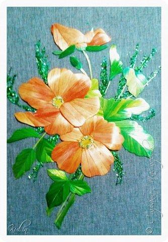 Шиповник- дикая роза... И в этом своя прелесть, как красив шиповник в цвету!