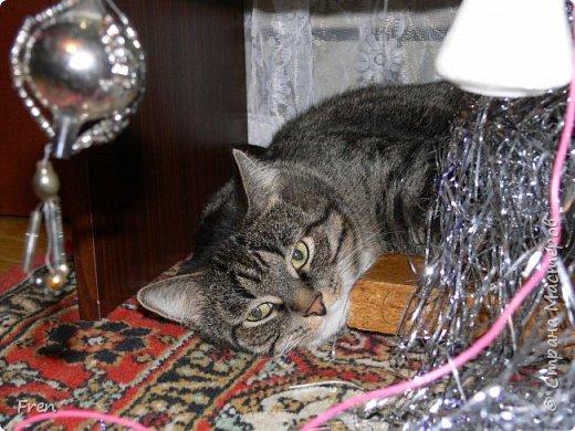 Всем доброго солнечного дня!!! Никаких грустный историй! Только позитив, только весна и КОШКИ! :)) Просто несколько коротких рассказов о знакомых мне и любимых мною кошках.  И самый первый это кот Серый. Конечно такого красавца и умницу должны звать по-другому, но я не знаю чей он, поэтому для меня просто Серый. :))   фото 16