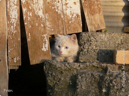 Всем доброго солнечного дня!!! Никаких грустный историй! Только позитив, только весна и КОШКИ! :)) Просто несколько коротких рассказов о знакомых мне и любимых мною кошках.  И самый первый это кот Серый. Конечно такого красавца и умницу должны звать по-другому, но я не знаю чей он, поэтому для меня просто Серый. :))   фото 8