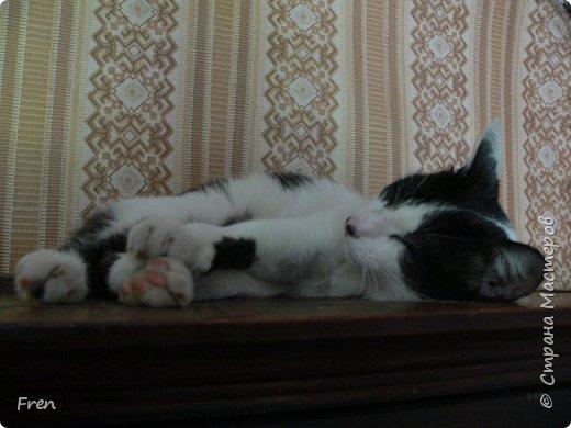 Всем доброго солнечного дня!!! Никаких грустный историй! Только позитив, только весна и КОШКИ! :)) Просто несколько коротких рассказов о знакомых мне и любимых мною кошках.  И самый первый это кот Серый. Конечно такого красавца и умницу должны звать по-другому, но я не знаю чей он, поэтому для меня просто Серый. :))   фото 6