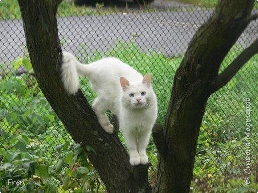 Всем доброго солнечного дня!!! Никаких грустный историй! Только позитив, только весна и КОШКИ! :)) Просто несколько коротких рассказов о знакомых мне и любимых мною кошках.  И самый первый это кот Серый. Конечно такого красавца и умницу должны звать по-другому, но я не знаю чей он, поэтому для меня просто Серый. :))   фото 9