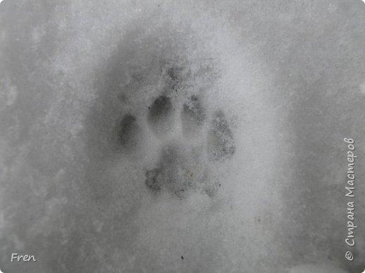 Всем доброго солнечного дня!!! Никаких грустный историй! Только позитив, только весна и КОШКИ! :)) Просто несколько коротких рассказов о знакомых мне и любимых мною кошках.  И самый первый это кот Серый. Конечно такого красавца и умницу должны звать по-другому, но я не знаю чей он, поэтому для меня просто Серый. :))   фото 23