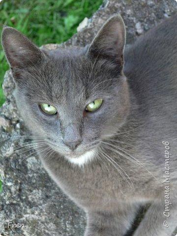 Всем доброго солнечного дня!!! Никаких грустный историй! Только позитив, только весна и КОШКИ! :)) Просто несколько коротких рассказов о знакомых мне и любимых мною кошках.  И самый первый это кот Серый. Конечно такого красавца и умницу должны звать по-другому, но я не знаю чей он, поэтому для меня просто Серый. :))   фото 1