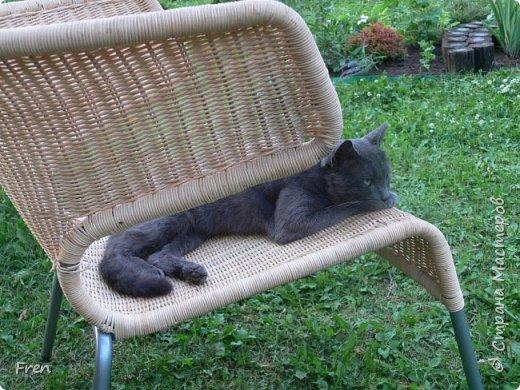 Всем доброго солнечного дня!!! Никаких грустный историй! Только позитив, только весна и КОШКИ! :)) Просто несколько коротких рассказов о знакомых мне и любимых мною кошках.  И самый первый это кот Серый. Конечно такого красавца и умницу должны звать по-другому, но я не знаю чей он, поэтому для меня просто Серый. :))   фото 2