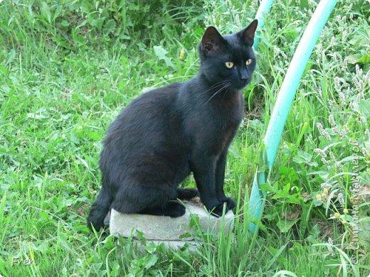 Всем доброго солнечного дня!!! Никаких грустный историй! Только позитив, только весна и КОШКИ! :)) Просто несколько коротких рассказов о знакомых мне и любимых мною кошках.  И самый первый это кот Серый. Конечно такого красавца и умницу должны звать по-другому, но я не знаю чей он, поэтому для меня просто Серый. :))   фото 21