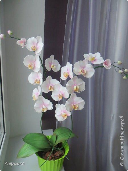 """Здравствуйте. Я с очередной орхидеей. На  этот раз не просто ветка, а полноценный  кустик """"вырастила"""". фото 1"""