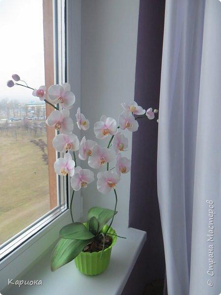 """Здравствуйте. Я с очередной орхидеей. На  этот раз не просто ветка, а полноценный  кустик """"вырастила"""". фото 3"""