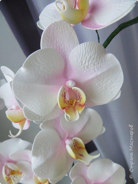 """Здравствуйте. Я с очередной орхидеей. На  этот раз не просто ветка, а полноценный  кустик """"вырастила"""". фото 5"""