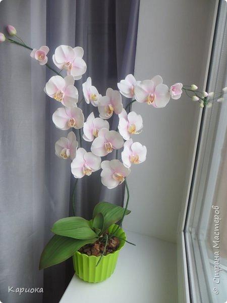 """Здравствуйте. Я с очередной орхидеей. На  этот раз не просто ветка, а полноценный  кустик """"вырастила"""". фото 7"""