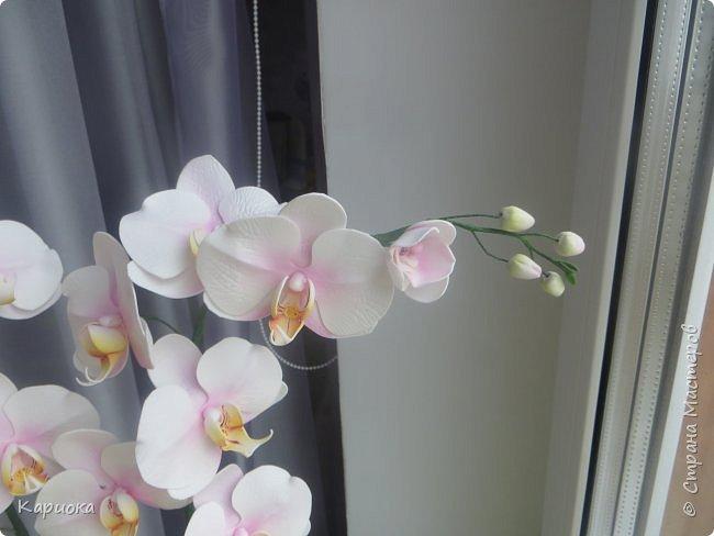 """Здравствуйте. Я с очередной орхидеей. На  этот раз не просто ветка, а полноценный  кустик """"вырастила"""". фото 8"""