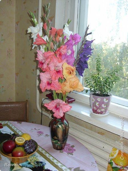 Здравствуйте жители Страны Мастеров.Давно я ничего не выкладывал ,было много дел.Пока делается мебель в дом-тыкву,между делом и в честь прошедшего праздника 8 марта,хочу вам показать небольшой фоторепортаж про цветы.А цветов много не бывает.Как было красиво на улице в этот праздничный женский день,женщины идут с цветами,мужчины идут с цветами.куда не глянь везде цветы.  Четыре года назад  в августе я вместе с тёщей,женой и дочкой ездили на выставку гладиолусов, которая проходила в ботаническом саду у нас в Минске. Конечно это не весенние цветы но они очень красивые и мне захотелось показать их вам.Надеюсь вам понравиться. фото 33