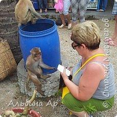 Вьетнам . Таиланд. Китай. Доминикана (остров Гаити). Слониха которая очень любит вафельные трубочки фото 2