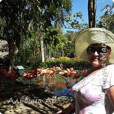 Вьетнам . Таиланд. Китай. Доминикана (остров Гаити). Слониха которая очень любит вафельные трубочки фото 14