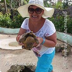 Вьетнам . Таиланд. Китай. Доминикана (остров Гаити). Слониха которая очень любит вафельные трубочки фото 18