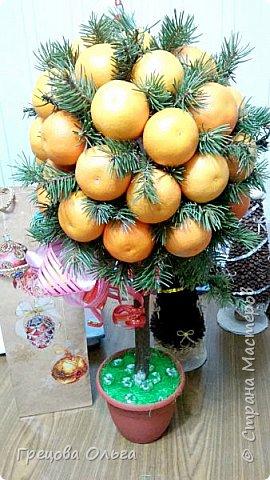 Мандариновое дерево фото 3