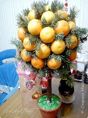 Мандариновое дерево фото 4
