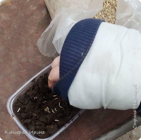 Наступила весна и повсюду уже видны первые росточки зелени. Мы с сыночком решили посадить травку и понаблюдать за её ростом. фото 3