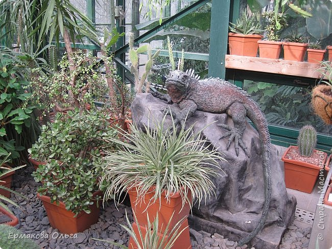 Аптекарский огород ботанического сада МГУ основан в 1706 году Петром Великим. Это старейший ботанический сад России.Я приглашаю Вас прогуляться по его оранжереям... фото 19