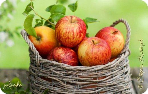 """""""Спелые яблочки"""" фото 1"""