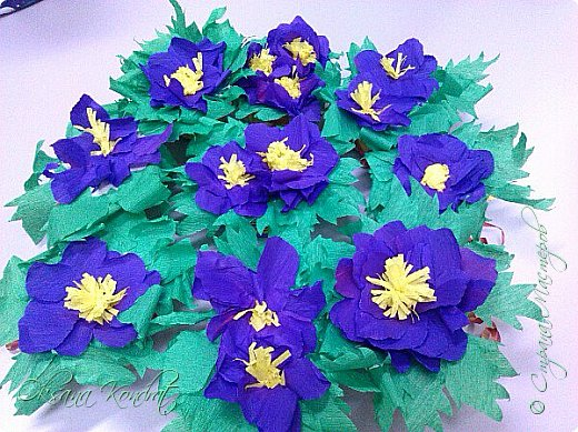 первоцветы фото 5