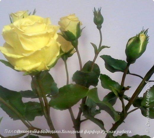 Добрый день мастера и мастерицы!!!!Сегодня у меня расцвели лимонные кустовые розы!!!!! фото 2