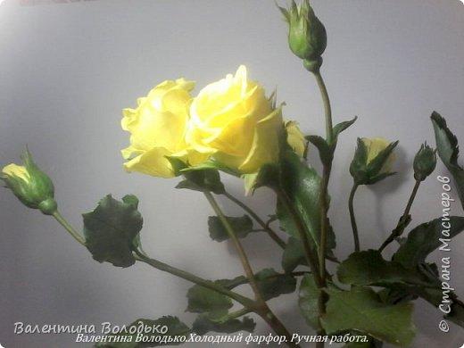 Добрый день мастера и мастерицы!!!!Сегодня у меня расцвели лимонные кустовые розы!!!!! фото 5