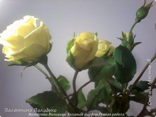 Добрый день мастера и мастерицы!!!!Сегодня у меня расцвели лимонные кустовые розы!!!!! фото 6