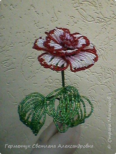 Праздник прошел , но цветы всегда   в тренде  и их всегда приятно получать.Эти розы -  Будько Яны и Жулего Карины .Девочки учатся в 4 классе и  посещают кружок бисероплетения и вот результат их стараний!!! Эти цветы  из бисера , но в руках юных мастериц они ожили  и  засияли красотой !!!Девочки ,  вы  настоящие  рукодельницы !!!  МОЛОДЦЫ!!!  Браво!!! фото 3