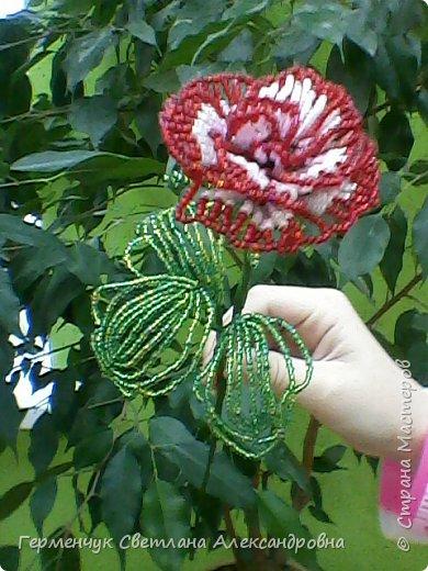 Праздник прошел , но цветы всегда   в тренде  и их всегда приятно получать.Эти розы -  Будько Яны и Жулего Карины .Девочки учатся в 4 классе и  посещают кружок бисероплетения и вот результат их стараний!!! Эти цветы  из бисера , но в руках юных мастериц они ожили  и  засияли красотой !!!Девочки ,  вы  настоящие  рукодельницы !!!  МОЛОДЦЫ!!!  Браво!!! фото 1