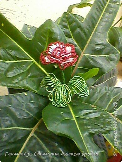 Праздник прошел , но цветы всегда   в тренде  и их всегда приятно получать.Эти розы -  Будько Яны и Жулего Карины .Девочки учатся в 4 классе и  посещают кружок бисероплетения и вот результат их стараний!!! Эти цветы  из бисера , но в руках юных мастериц они ожили  и  засияли красотой !!!Девочки ,  вы  настоящие  рукодельницы !!!  МОЛОДЦЫ!!!  Браво!!! фото 2