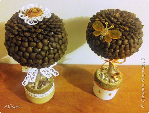 Деревья кофейные и не только фото 6