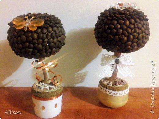 Деревья кофейные и не только фото 5
