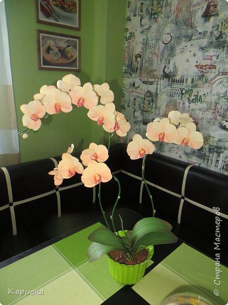 Всем привет! И снова орхидеи! Еще один кустик. фото 4