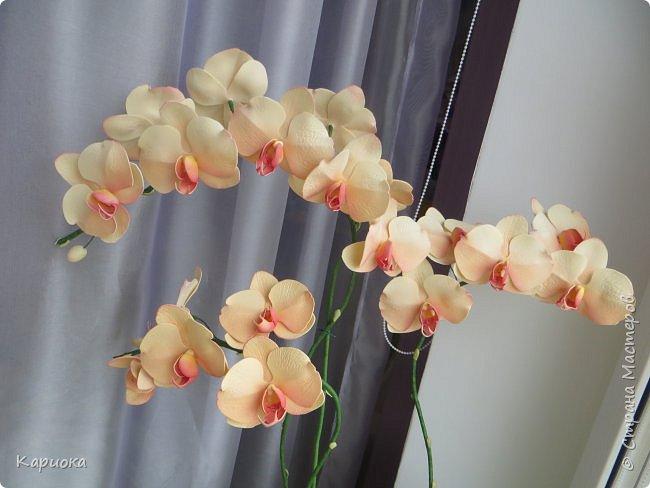 Всем привет! И снова орхидеи! Еще один кустик. фото 5