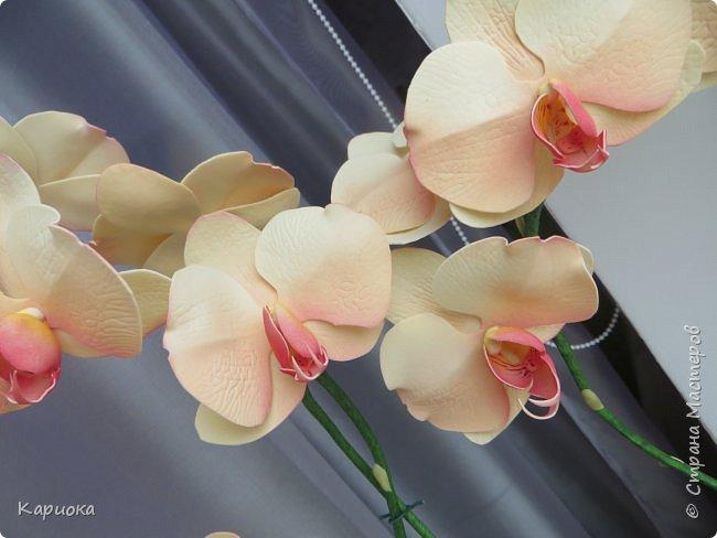 Всем привет! И снова орхидеи! Еще один кустик. фото 6
