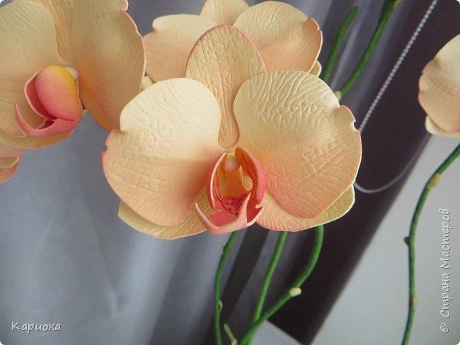 Всем привет! И снова орхидеи! Еще один кустик. фото 7