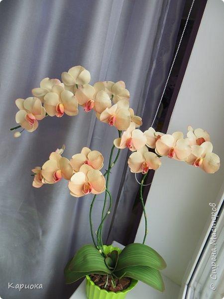Всем привет! И снова орхидеи! Еще один кустик. фото 1