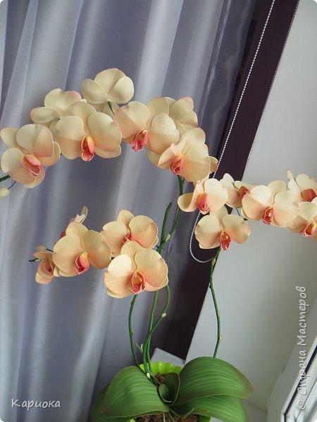 Всем привет! И снова орхидеи! Еще один кустик. фото 2