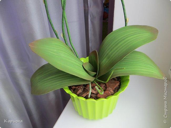 Всем привет! И снова орхидеи! Еще один кустик. фото 8